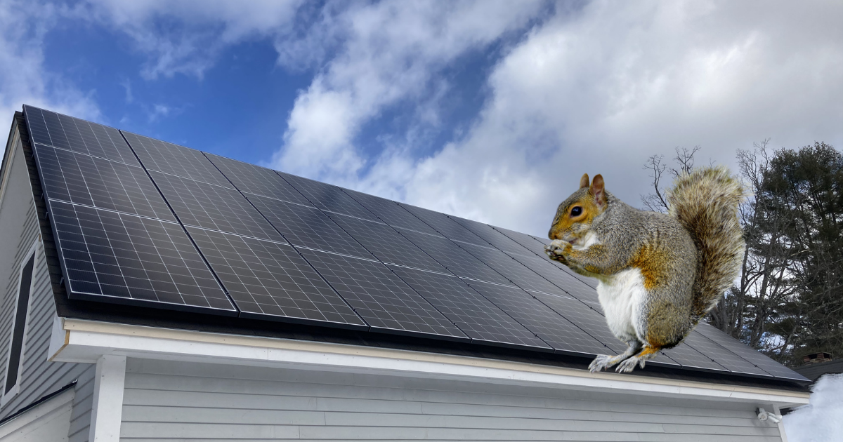 Solar and Squirrels: How to Protect Your Panels